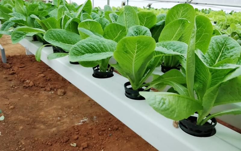 Know how to farm without soil