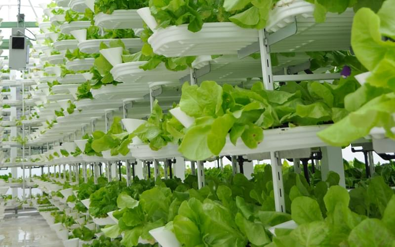 Future of farming is indoors