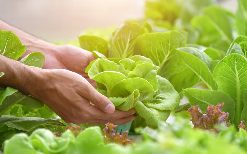 Grow Healthy Veggies and Fruits with Hydroponics