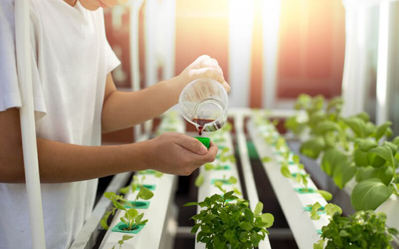 How important are the nutrients in hydroponics?