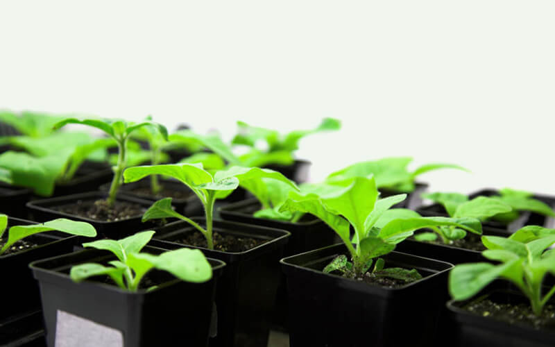 Grow Plants and Vegetables Hydroponically