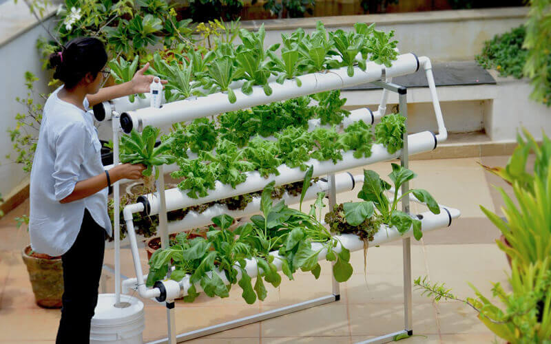 Hydroponic kit in Hyderabad