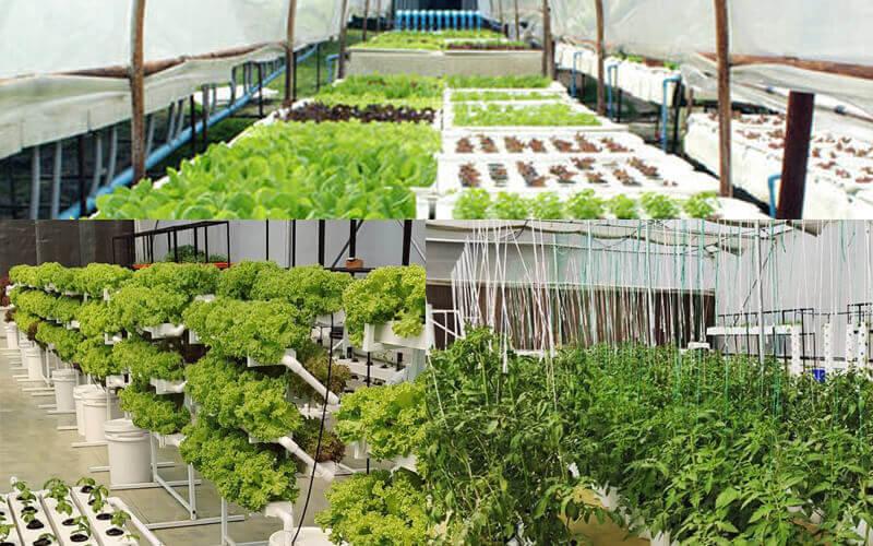 Hydroponics farming Hyderabad