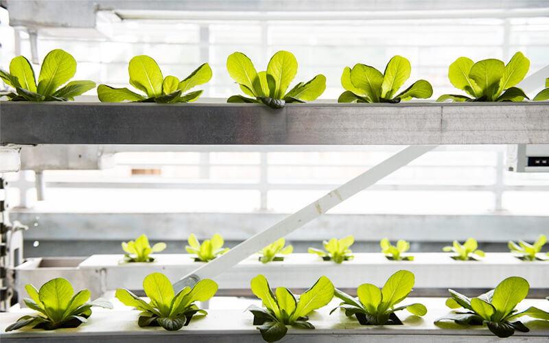 Hydroponics is the new revolution in agrotech