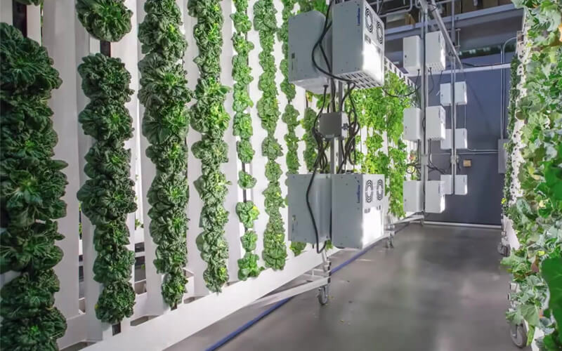 Indoor farming is the future of the country to meet the demand for fresh stocks