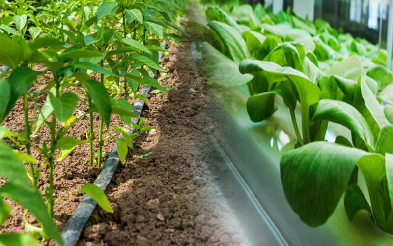 Is It possible to grow everything through hydroponics as in traditional farming