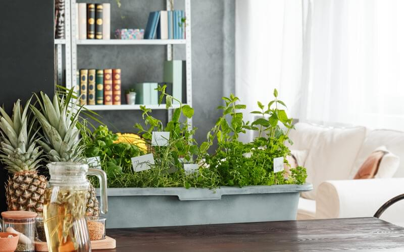 Top benefits of indoor gardening