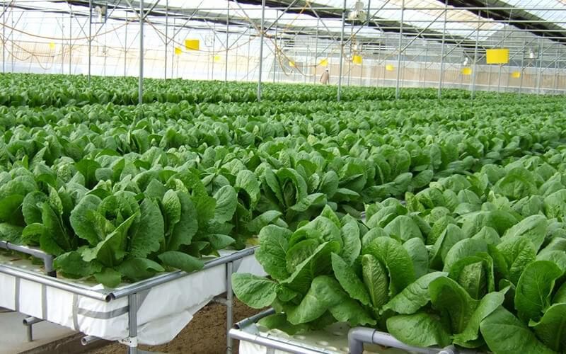 Conditions For Growing With Hydroponics