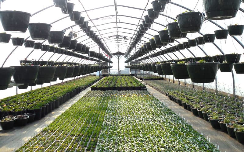 How Indoor Farming Has Changed the Future of Farms?
