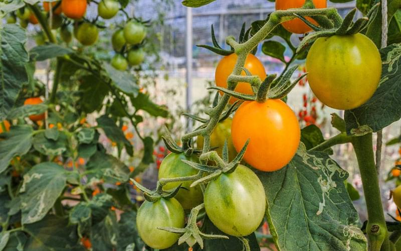 8 Reasons Why Growing Your Own Food Is The Healthiest